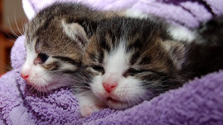 Uitbraak kattenziekte
