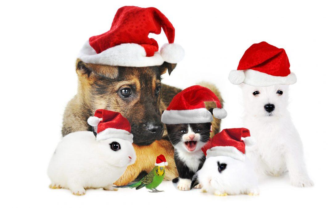 Veilige kerst voor mens en dier